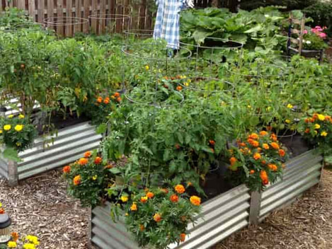 Narrow Grande Garden Beds