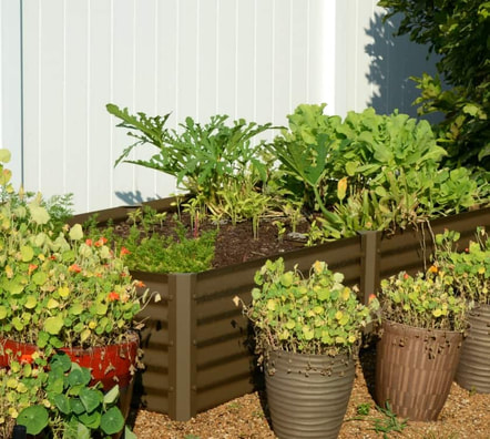 Narrow Rustic Sandia Garden Beds